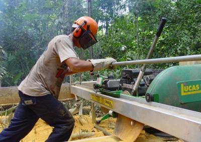 homem cortando árvore