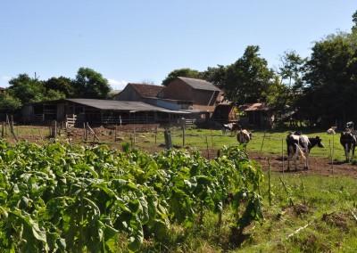regularização de propriedade rural 3
