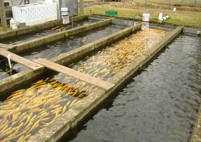 tanque de peixes2